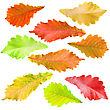 Collection Of Tree Leaves stock photo