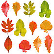 Detailed Collection Of Tree Leaves stock photo