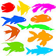 Color Silhouette Of Aquarium Fish On White Background