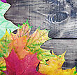 Colored Autumn Leaves On A Wooden Table. Focus On The Middle The Leaves stock image