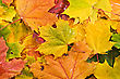 Colored Background Of Fallen Autumn Leaves stock image