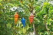 Colorful Chinese Lanterns Hanging On A Tree stock photography