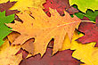 Colorful Image Of Fallen Leaves. Perfect For Seasonal Use stock image