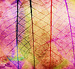 Colorful Skeleton Leaves For Background