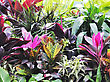 Colorful Tropical Plants ,Close Up stock image