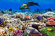 Egypt Coral And Fish In The Red Sea.Egypt stock photo