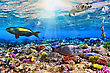 World Coral And Fish In The Red Sea.Egypt stock photo