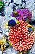 Coral And Fish In The Red Sea.Egypt stock photography