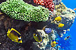 Egypt Coral And Fish In The Red Sea.Egypt stock image