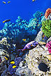 Alive Coral And Fish In The Red Sea.Egypt stock photography