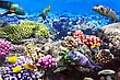 Atoll Coral And Fish In The Red Sea.Egypt stock photography