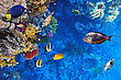 Hawaii Coral And Fish In The Red Sea.Egypt stock photography