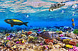 Hawaii Coral And Fish In The Red Sea.Egypt stock image