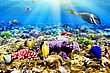 Diving Coral And Fish In The Red Sea.Egypt stock photo