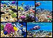 Diving Coral And Fish In The Red Sea. Egypt, Africa. Collage stock image