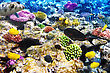 Coral And Fish In The Red Sea. Egypt, Africa stock photography