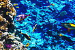 Atoll Coral And Fish In The Red Sea. Egypt, Africa stock photography