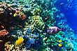 Coral And Fish In The Red Sea. Egypt, Africa stock image