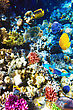 Under Coral And Fish In The Red Sea. Egypt, Africa stock photo