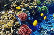 Undersea Coral And Fish In The Red Sea. Egypt, Africa stock image