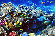 Undersea Coral And Fish In The Red Sea. Egypt, Africa stock photography