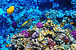 Alive Coral And Fish In The Red Sea. Egypt, Africa stock photo
