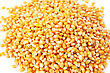 Corns Kernel Close Up Picture. stock photo