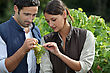 Couple Examining Grape Vine stock image