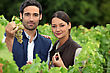 Autumn Couple Of Wine-growers In Vineyards stock photo