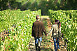 Couple Walking In Between Rows Of Vines stock photo
