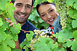 Couple Of Wine-growers All Smiles Amid Vineyards stock image