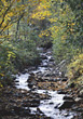 Creek in the Autumn Forest stock photography