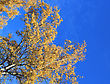 Crown Of Autumn Trees On Blue Sky Background stock photo