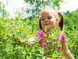 Cute Little Girl Is Picking Sweetberies From The Bushes stock image