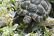 Cute Turtle Eating Green Leaves stock photo