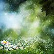 Daisy Flowers Under The Sweet Rain, Natural Backgrounds stock image