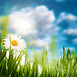 Daisy On The Meadow, Abstract Natural Backgrounds For Your Design stock image