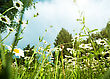 Daisy Meadow, Natural Landscape stock photography
