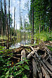 Dam Of Logs And Branches, Made Of Beaver On The Forest Stream stock image