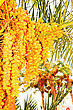 Date Palm At Sun Light stock image