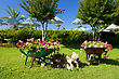 Decorative Flower Garden With Carts At The Resort stock image