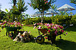 Decorative Flower Garden With Carts At The Resort stock photo