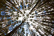 In The Deep Forest. Looking Up, Shot With Fisheye Lens stock image
