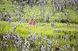 Deer And Fawn In Field In Saskatchewan Canada stock photo