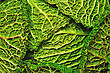 Detail Of A Crinkly Cabbage Leaf Background stock photography