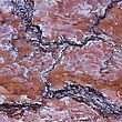 Detail Of Fissured Red Bark stock photography