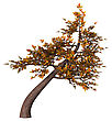 Digital Render Of An Autumnal Bonsai Tree Isolated On White Background, Shakan Style