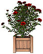 Digital Render Of A Red Rose Bush Isolated On White Background