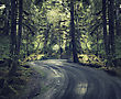 Dirt Road In A Rain Forest stock photo