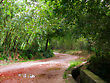 Dirt Road Winding Through The Woods stock image